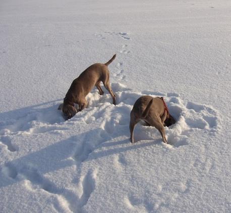 Ankes Hunde
