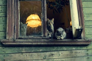 moscow-dacha-muromtsev-cats-1-550