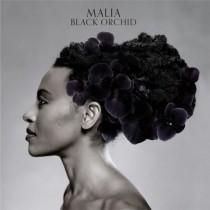 Malia: Black Orchid