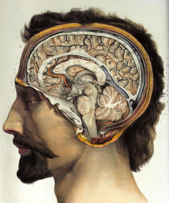 Mann+Gehirn