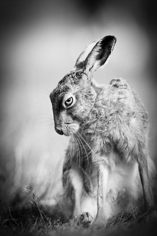 Pete_Denness_Wildlife_Nov_UK_11-