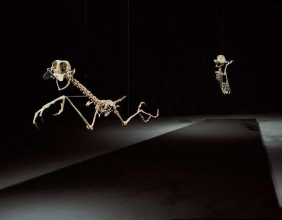 coyote-road-runner-cartoon-skeletons-Hyungkoo-Leejpg