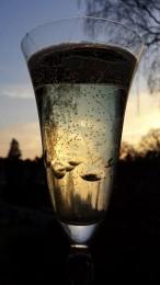 sektglas (c) anne kuhlmeyer