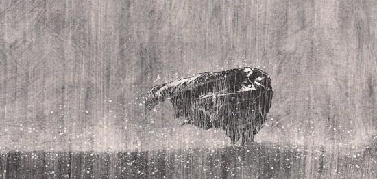 blast-Larcenet-blast-pluie