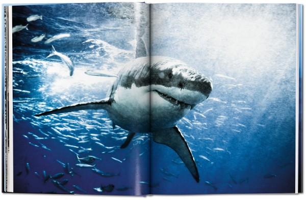 sharks_fo_gb_open_0Mueller_Haie