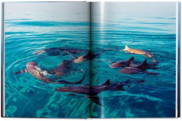 sharks_fo_gb_open_mueller_haie
