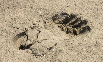 heel-strike-on-sand-footprint-barefoot-running-university