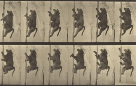Eadweard J. Muybridge, photographer (American, born England, 1830 - 1904), Animal Locomotion, American, 1887, Collotype, 20.8 x 34.6 cm (8 3/16 x 13 5/8 in.), 84.XM.628.12.