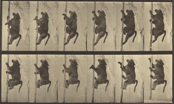 Eadweard J. Muybridge, photographer (American, born England, 1830 - 1904), Animal Locomotion, American, 1887, Collotype, 20.8 x 34.6 cm (8 3/16 x 13 5/8 in.), 84.XM.628.12.