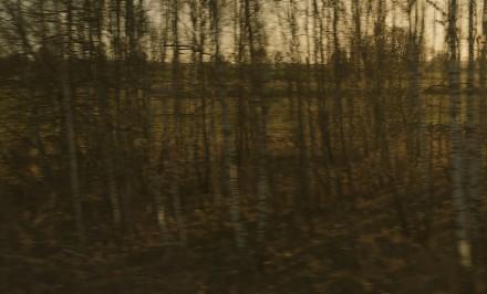 LS-Buchenwald