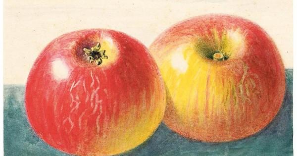 Reihe Naturkunden Äpfel